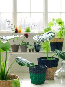 IKEA-Nipprig-range-woven-baskets-for-indoor-plants