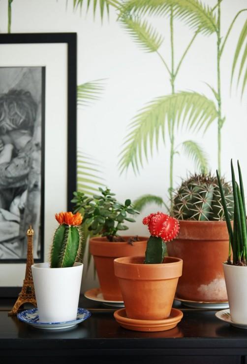 2-cactus-verzameling